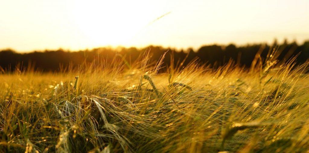 agricultura y la meteorología